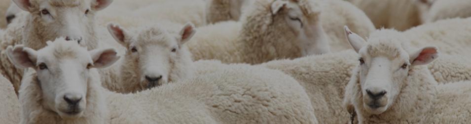 Sheep Farmers